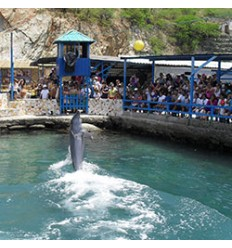 Tour Acuario Playa Blanca
